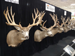 Sportsman's is a key sponsor of Eastman's Deer Tour.
