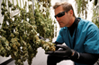 AltMed Florida Global Marketing Director Todd Beckwith inspects flower in dry room