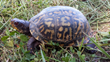 New national partnership begins to protect America's turtles, end illegal trafficking