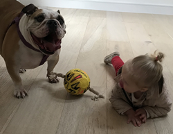 English bulldog with his best friend