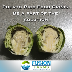 Puerto Rico Food Insecurity