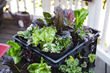 Smart Pots has powered up a way to reuse milk crates for gardening with new Milk Crate Liners