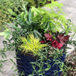 Container garden created with gorgeous plants from Little Prince of Oregon Nursery