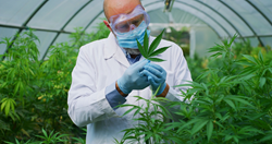 Online training and Certification for Budtender, Cannabis Growing, Cannabis Operations