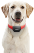 Introducing Petpuls, the AI-powered Dog Collar That Gives Your Dog a 'Voice'