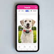 Petpuls App Dog Profile: Stella the Labrador Retriever