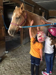 Spaulding Youth Center students in Northfield, New Hampshire participate in equine therapy programs.