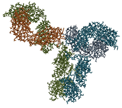 Picture of an antibody