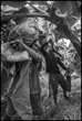 Workers harvest bananas in the field of the DARBCO cooperative in the Mindanao city of Panabo. 2019. The David Bacon Archive, Department of Special Collections, Stanford Libraries.
