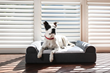 Dog Cloud Bed Launches on Kickstarter Bringing Proven Therapeutic Massage to Furry Family Members