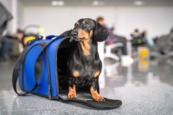 Dog ready for travel