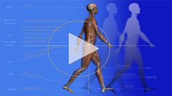Restoring Functional Gait -  A physical therapy continuing education course