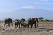 Elephant family in Amboseli region