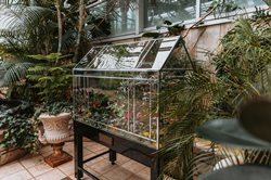 "Photo of glass ""Wardian case"" surrounded by tropical plants"