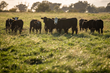 Grazing is the single largest land use in the U.S., with about 85% of the nation's 655 million acres unsuitable for production of human food crops.