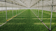 Leading Canadian Greenhouse Company Hydroserre Chooses Artemis as Digital Partner