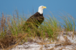 New Pensacola Beach Eco Trail Website Encourages Eco-Tourism