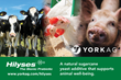 York Ag Features Hilyses, a Natural Yeast Additive, on Its New Website