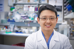 Fumito Ito, MD, PhD, and colleagues have shown that dendritic-cell treatment vaccines can be combined with radiation therapy as a potential treatment for some breast cancers.